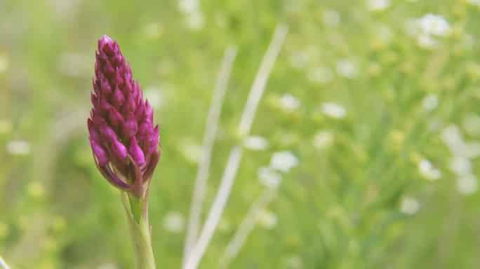 biljni lek za tumore