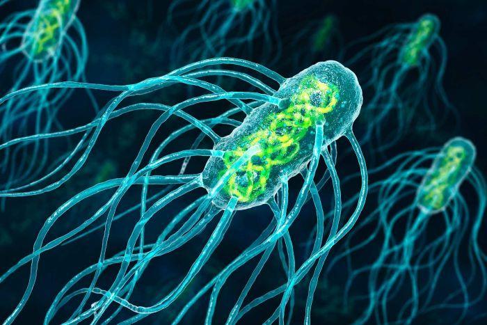 mikroorganizmi bakterije