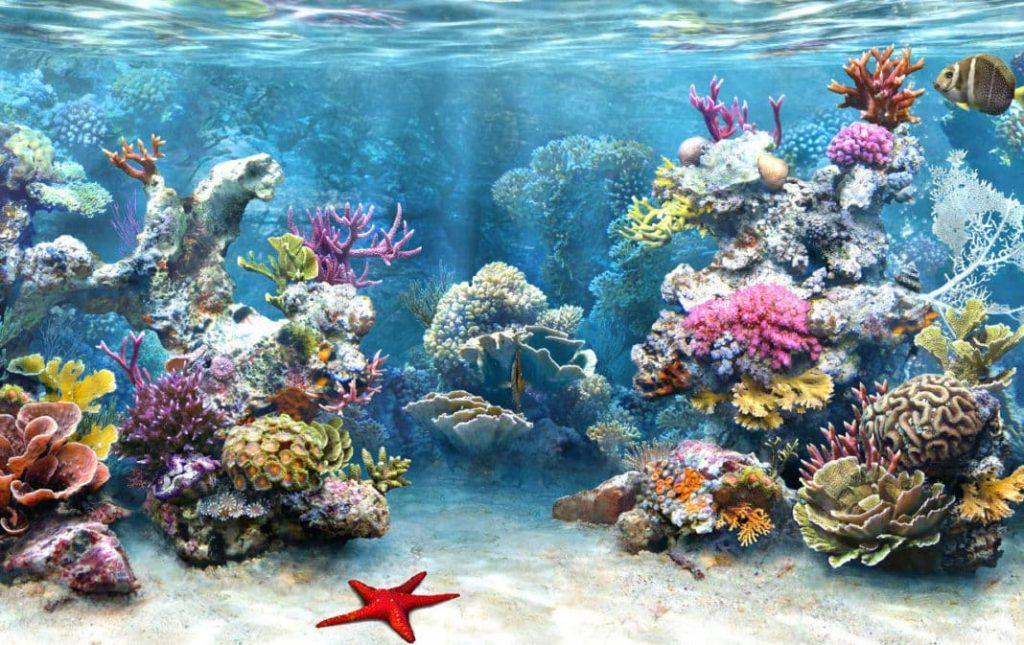 Korallenkalziumbild