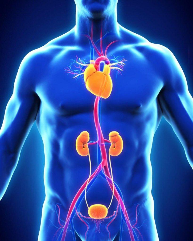 Abdominalna aorta