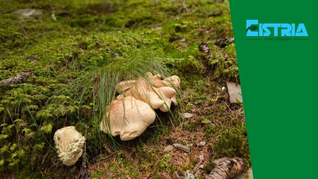 gljiva u šumi